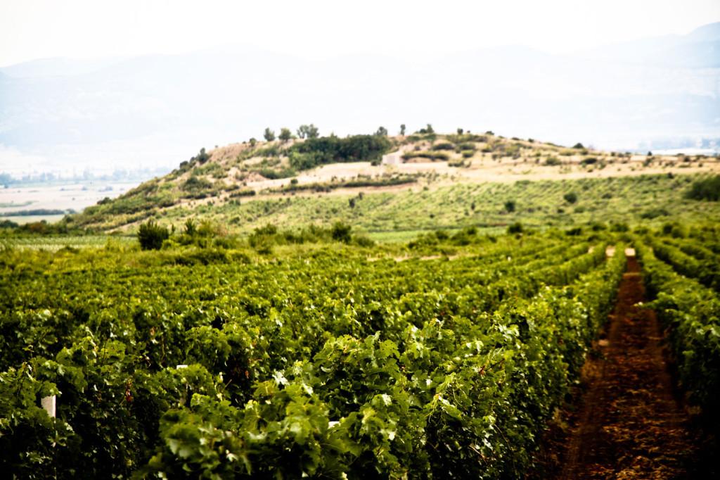wijngaard rossidi winery