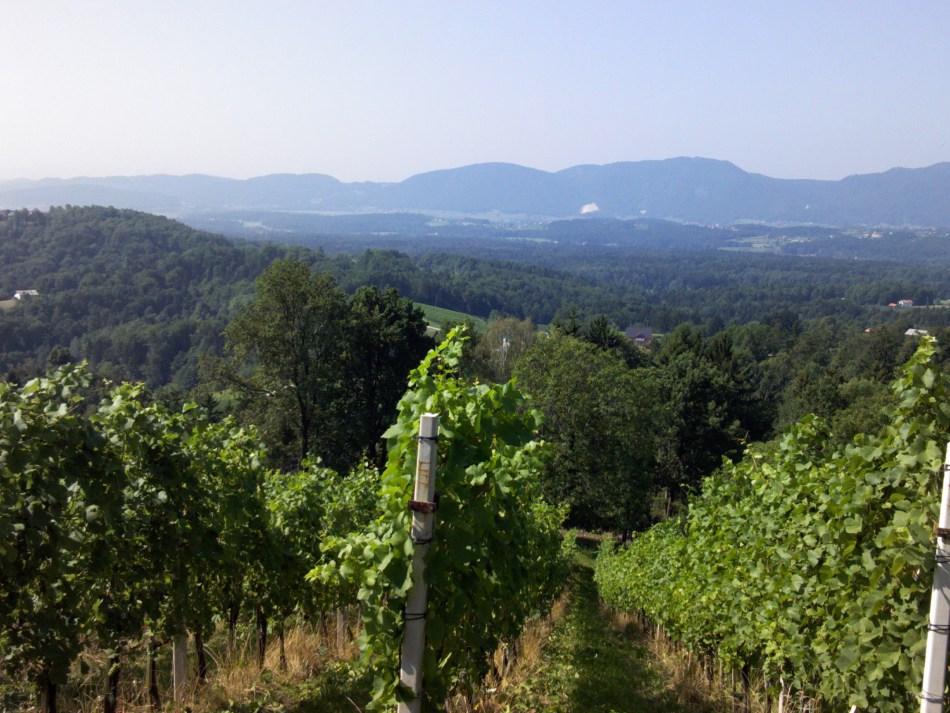 wijngaard okoska gora slovenië hepas good wine company